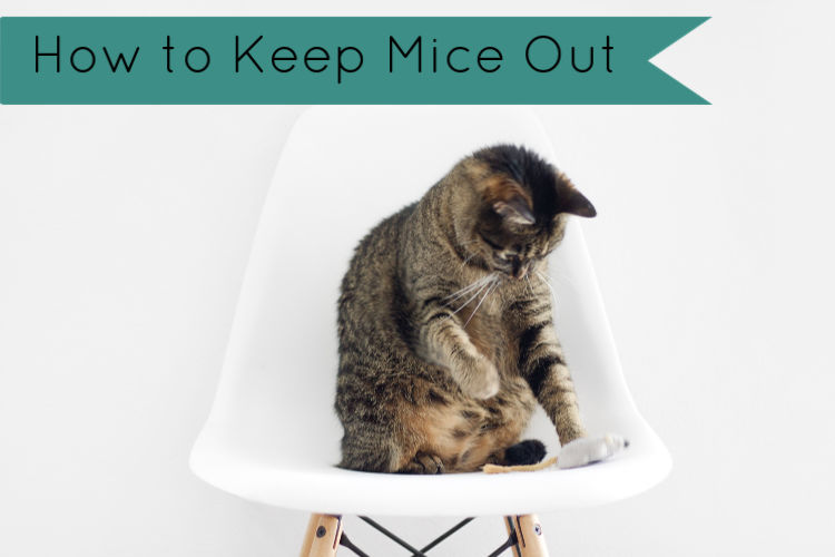 How to keep the mice out of your camper