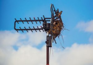 RV TV Antenna Old one with Bird Nest in it ft