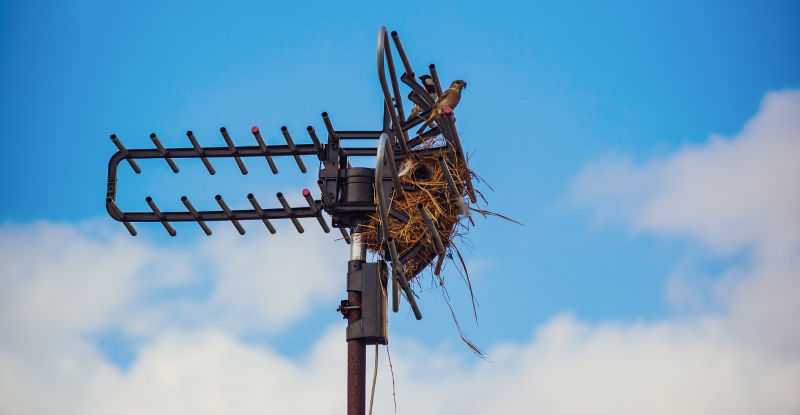 RV TV Antenna Old one with Bird Nest in it